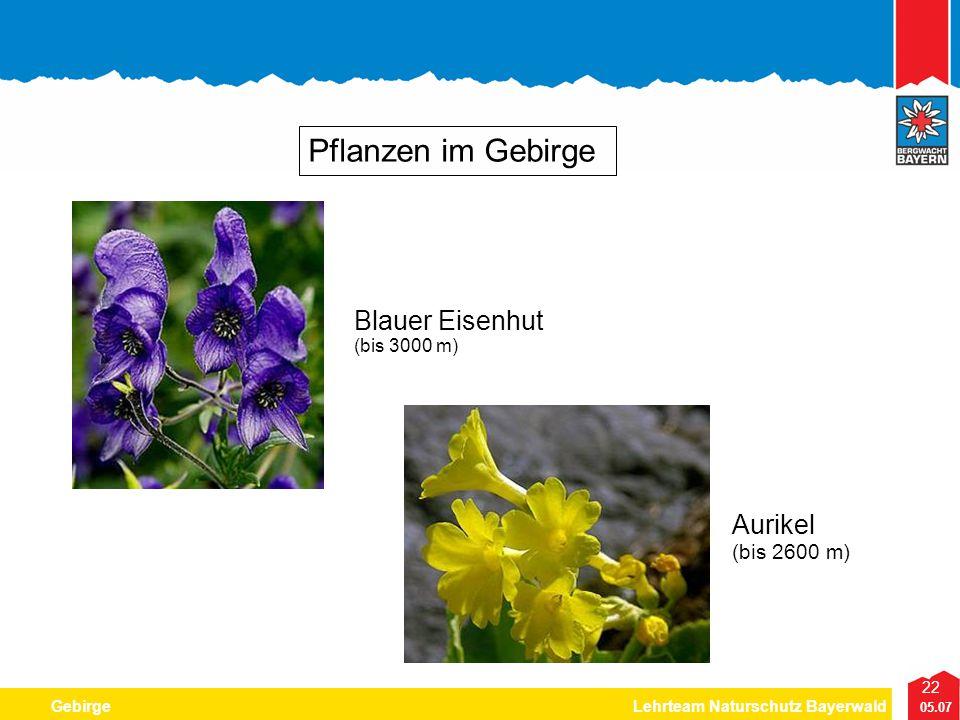 22 05.07 GebirgeLehrteam Naturschutz Bayerwald Pflanzen im Gebirge Aurikel (bis 2600 m) Blauer Eisenhut (bis 3000 m)