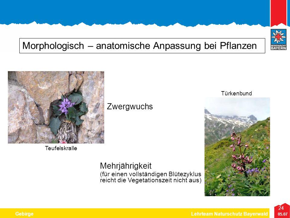 24 05.07 GebirgeLehrteam Naturschutz Bayerwald GEBIRGE Morphologisch – anatomische Anpassung bei Pflanzen Mehrjährigkeit (für einen vollständigen Blüt