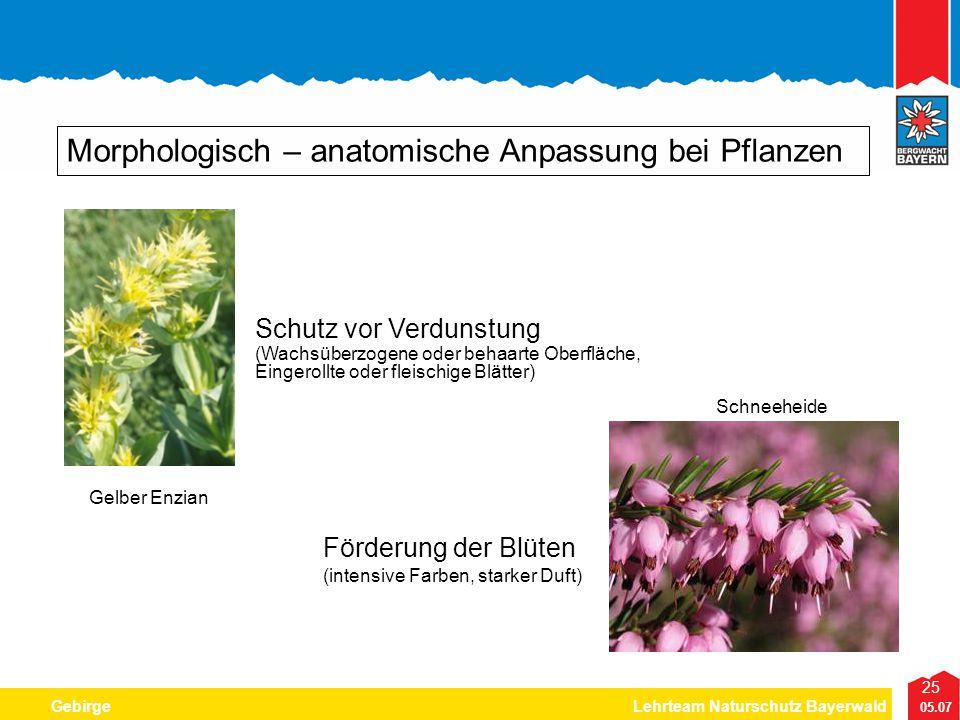 25 05.07 GebirgeLehrteam Naturschutz Bayerwald Morphologisch – anatomische Anpassung bei Pflanzen Förderung der Blüten (intensive Farben, starker Duft