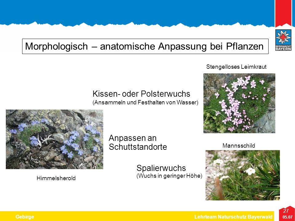 27 05.07 GebirgeLehrteam Naturschutz Bayerwald Morphologisch – anatomische Anpassung bei Pflanzen Kissen- oder Polsterwuchs (Ansammeln und Festhalten