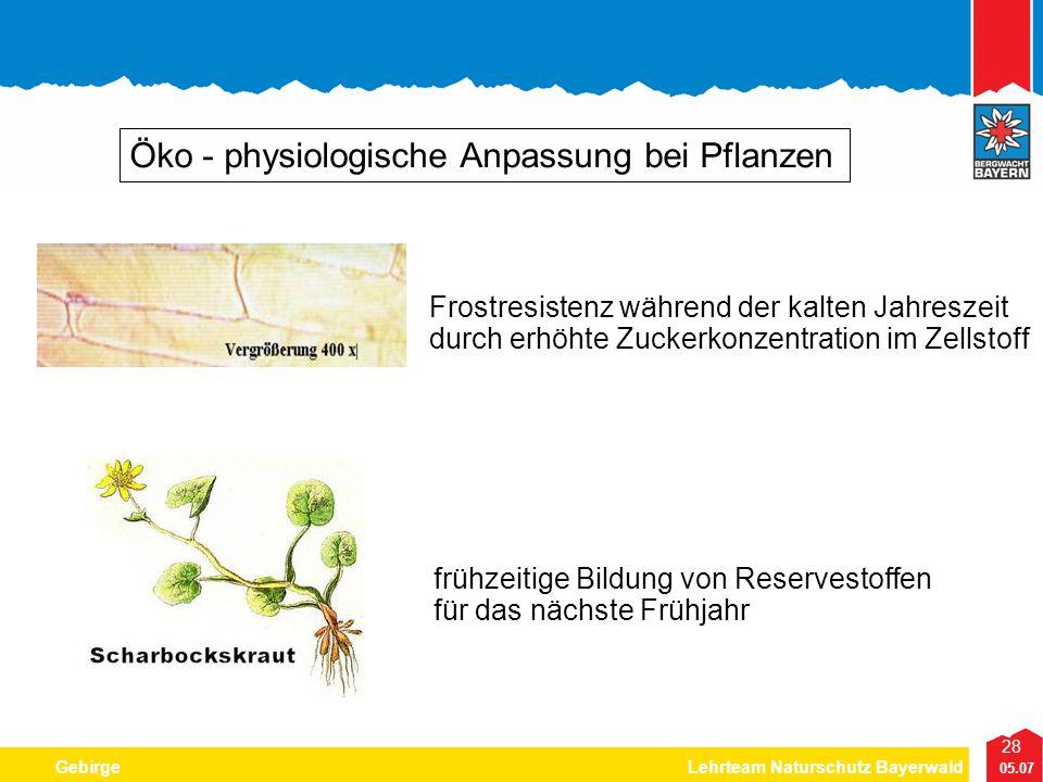 28 05.07 GebirgeLehrteam Naturschutz Bayerwald Öko - physiologische Anpassung bei Pflanzen Frostresistenz während der kalten Jahreszeit durch erhöhte