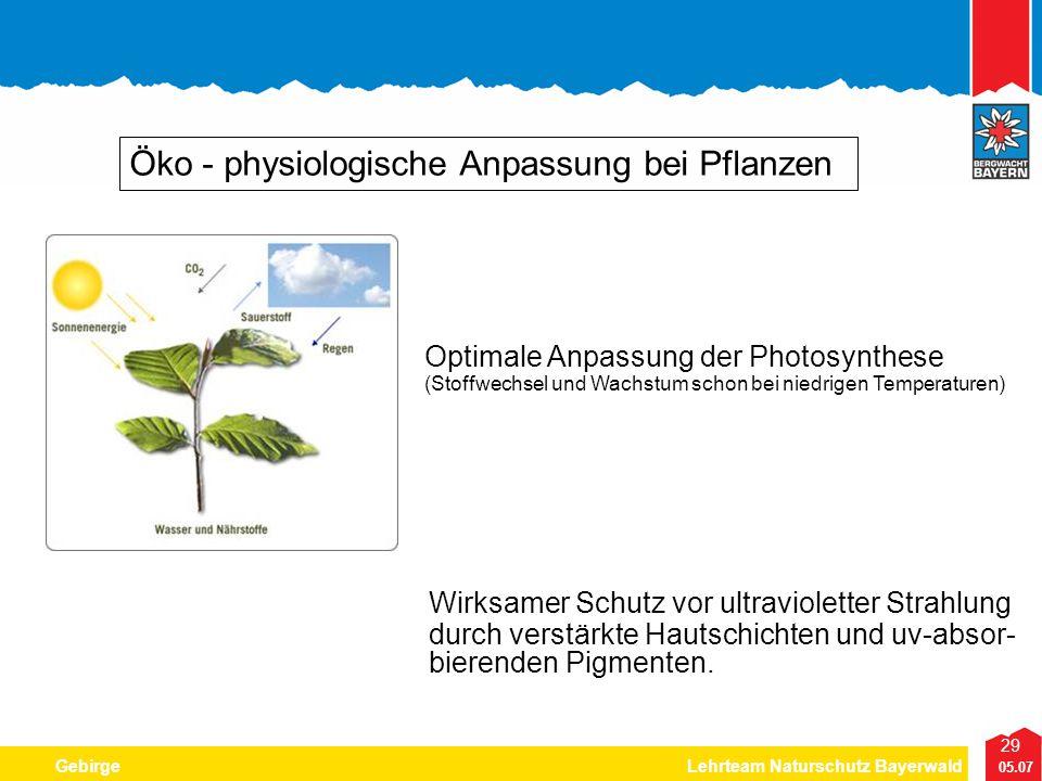 29 05.07 GebirgeLehrteam Naturschutz Bayerwald Öko - physiologische Anpassung bei Pflanzen Optimale Anpassung der Photosynthese (Stoffwechsel und Wach