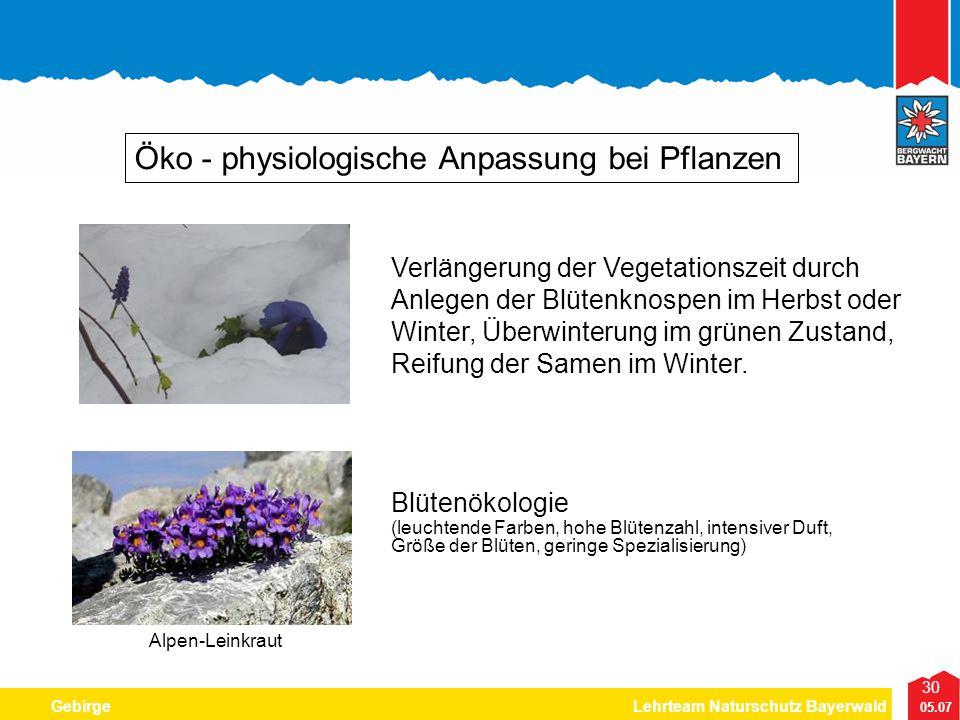 30 05.07 GebirgeLehrteam Naturschutz Bayerwald Öko - physiologische Anpassung bei Pflanzen Blütenökologie (leuchtende Farben, hohe Blütenzahl, intensi