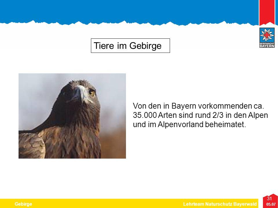 31 05.07 GebirgeLehrteam Naturschutz Bayerwald Tiere im Gebirge Von den in Bayern vorkommenden ca. 35.000 Arten sind rund 2/3 in den Alpen und im Alpe