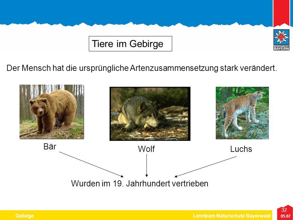 32 05.07 GebirgeLehrteam Naturschutz Bayerwald Tiere im Gebirge Der Mensch hat die ursprüngliche Artenzusammensetzung stark verändert. Bär WolfLuchs W