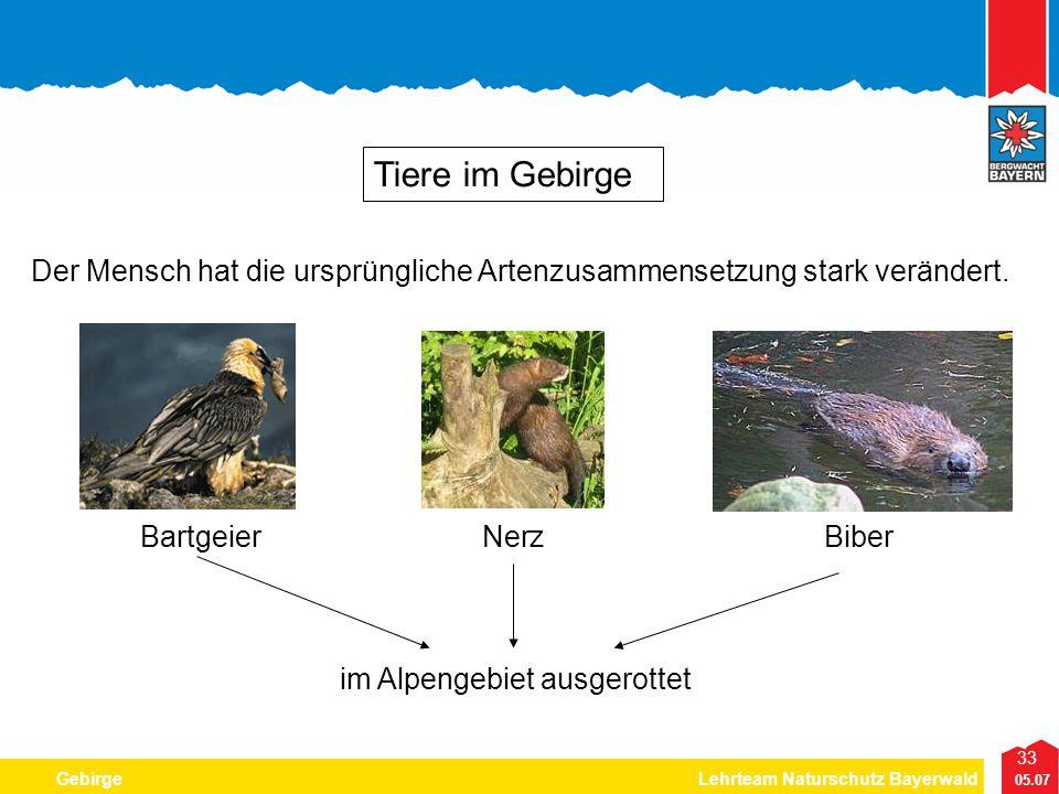 33 05.07 GebirgeLehrteam Naturschutz Bayerwald Tiere im Gebirge Der Mensch hat die ursprüngliche Artenzusammensetzung stark verändert. BartgeierNerzBi