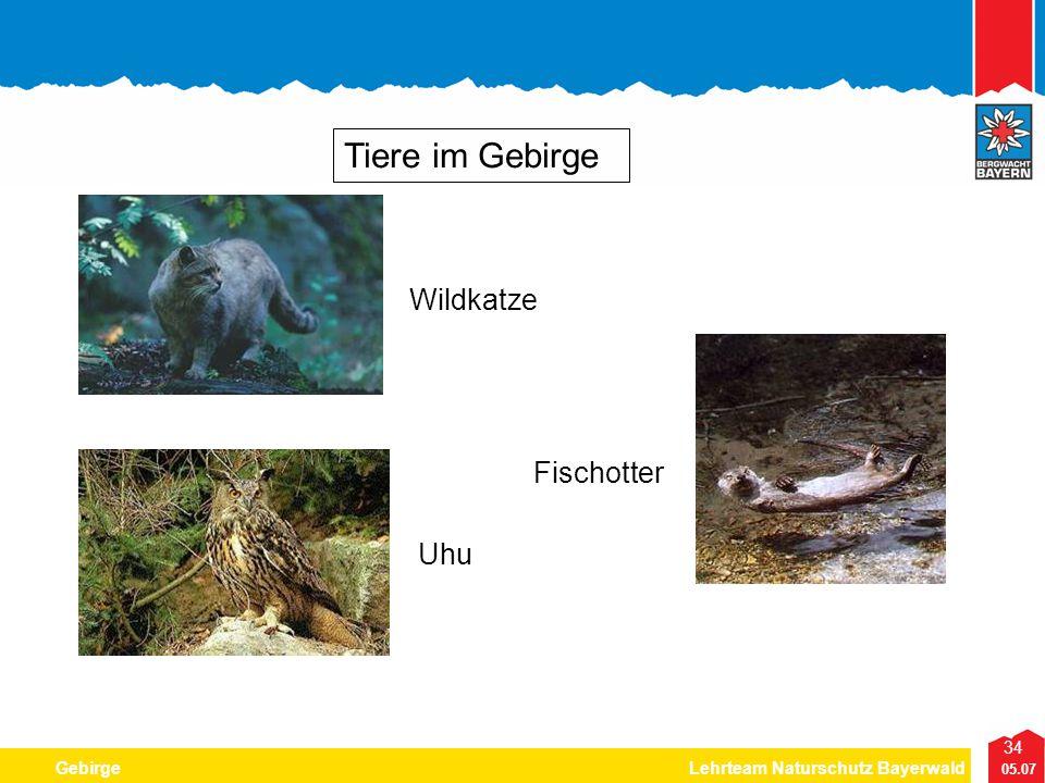 34 05.07 GebirgeLehrteam Naturschutz Bayerwald Tiere im Gebirge Wildkatze Fischotter Uhu