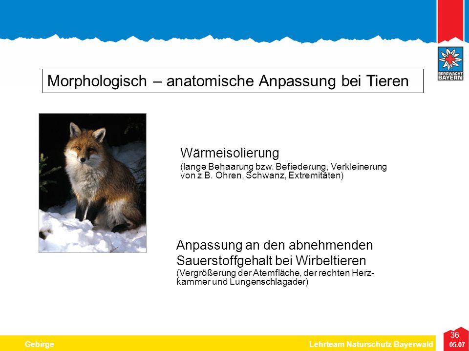 36 05.07 GebirgeLehrteam Naturschutz Bayerwald Morphologisch – anatomische Anpassung bei Tieren Wärmeisolierung (lange Behaarung bzw. Befiederung, Ver