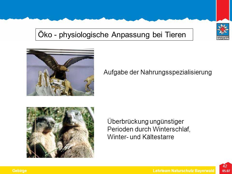42 05.07 GebirgeLehrteam Naturschutz Bayerwald Öko - physiologische Anpassung bei Tieren Aufgabe der Nahrungsspezialisierung Überbrückung ungünstiger