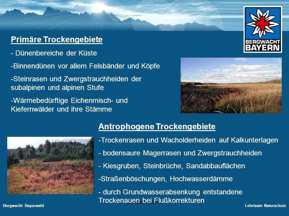 Bergwacht BayerwaldLehrteam Naturschutz Dezember 2002 Sand- und Kiefernwälder Sandflächen entwickeln sich im Binnenland zu Sand- und Kiefernwäldern weiter.