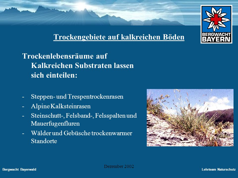 Bergwacht BayerwaldLehrteam Naturschutz Dezember 2002 Bedeutung und Wert der Trockenstandorte -Lebensräume für seltene Tiere und Pflanzen -Beherbergen Raubinsekten, die Schädlinge in benachbarten Kulturflächen vertilgen und so Insektizide sparen helfen.