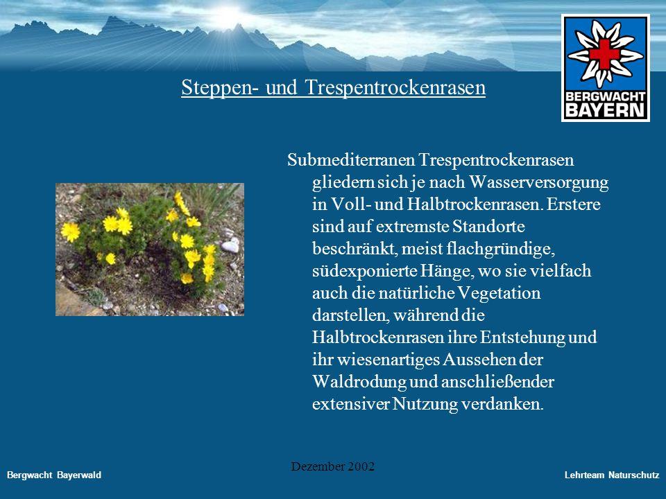 Bergwacht BayerwaldLehrteam Naturschutz Dezember 2002 Alpine Kalksteinrasen Im Süden der Bundesrepublik dringen mit abnehmender Entfernung zum Gebirgsrand immer mehr Arten von alpinen Kalksteinrasen ein: Die Trockenrasen Des Alpenvorlandes leiten damit über zu den echten Kalksteinrasen der subalpinen und alpinen Stufe des Hochgebirges.