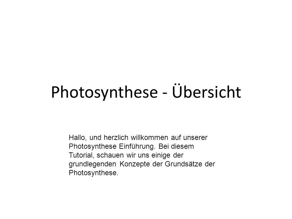 Photosynthese - Übersicht Hallo, und herzlich willkommen auf unserer Photosynthese Einführung.