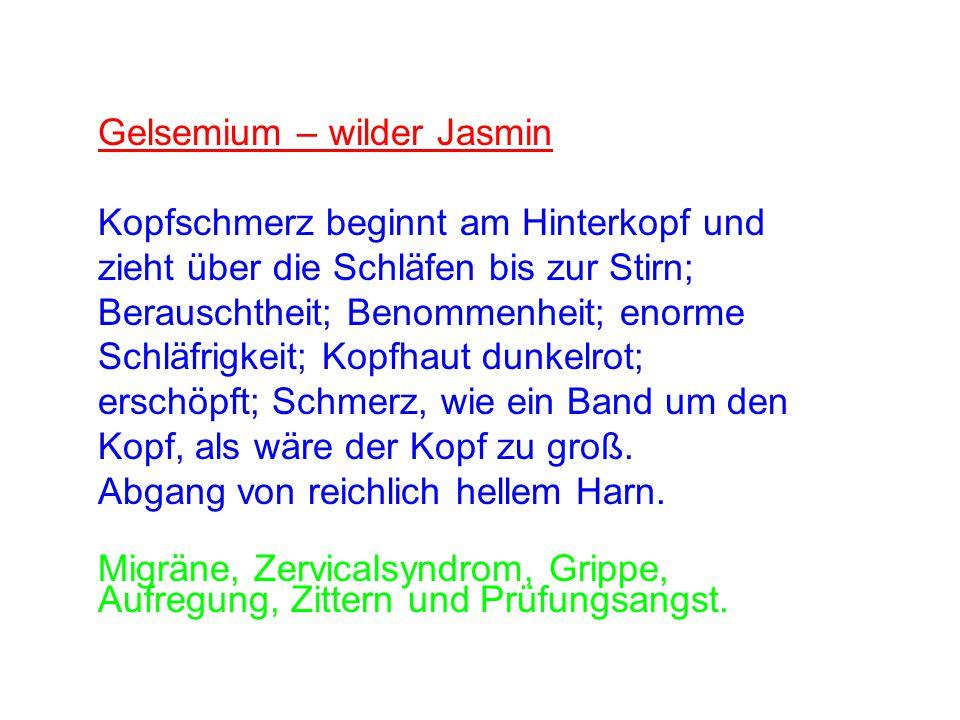 Gelsemium – wilder Jasmin Kopfschmerz beginnt am Hinterkopf und zieht über die Schläfen bis zur Stirn; Berauschtheit; Benommenheit; enorme Schläfrigke