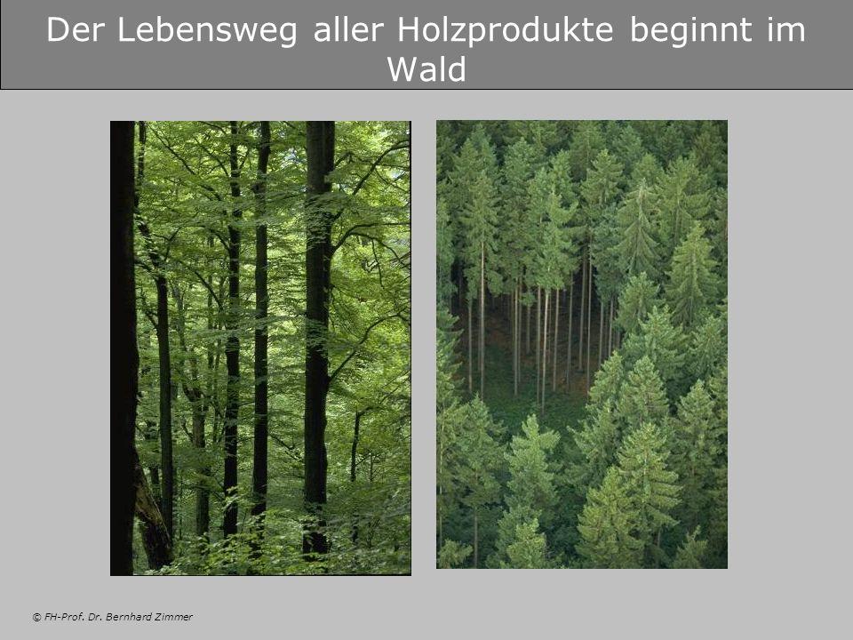 © FH-Prof. Dr. Bernhard Zimmer Der Lebensweg aller Holzprodukte beginnt im Wald