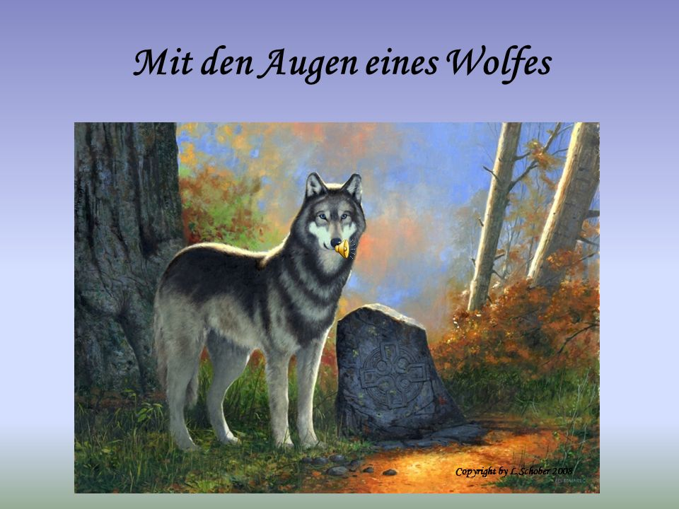 Mit den Augen eines Wolfes Copyright by L.Schober 2008