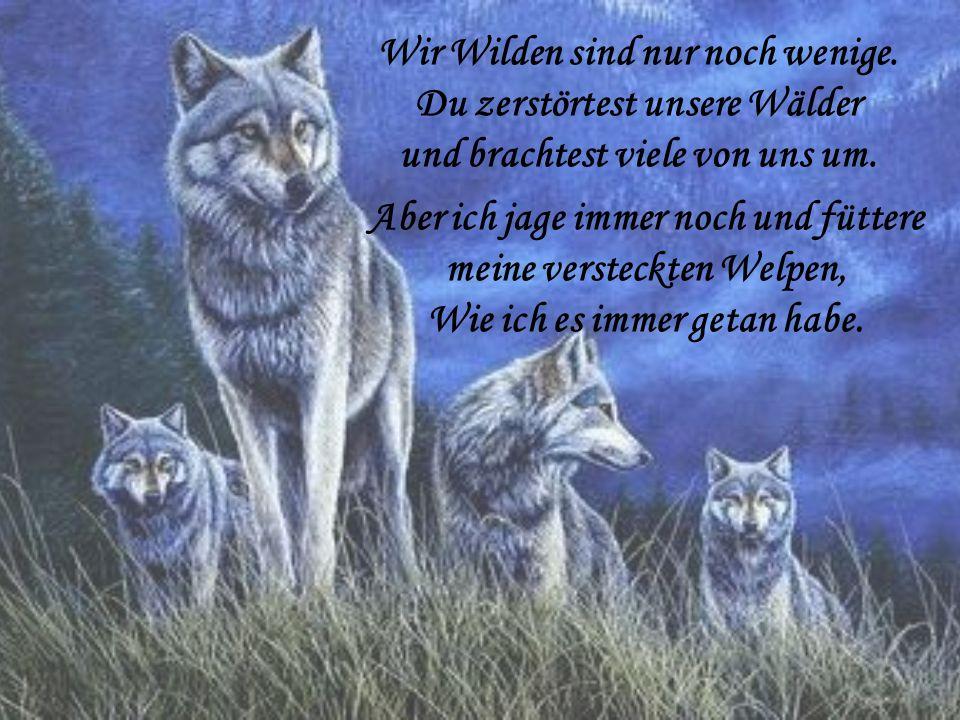 Wir Wilden sind nur noch wenige. Du zerstörtest unsere Wälder und brachtest viele von uns um. Aber ich jage immer noch und füttere meine versteckten W