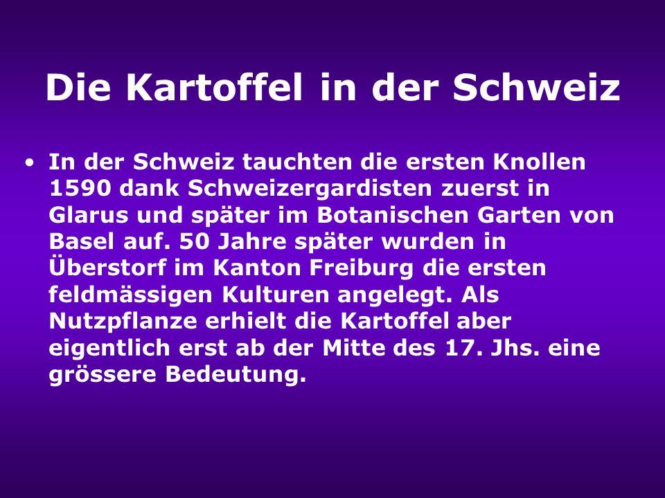 Die Kartoffel in der Schweiz In der Schweiz tauchten die ersten Knollen 1590 dank Schweizergardisten zuerst in Glarus und später im Botanischen Garten von Basel auf.