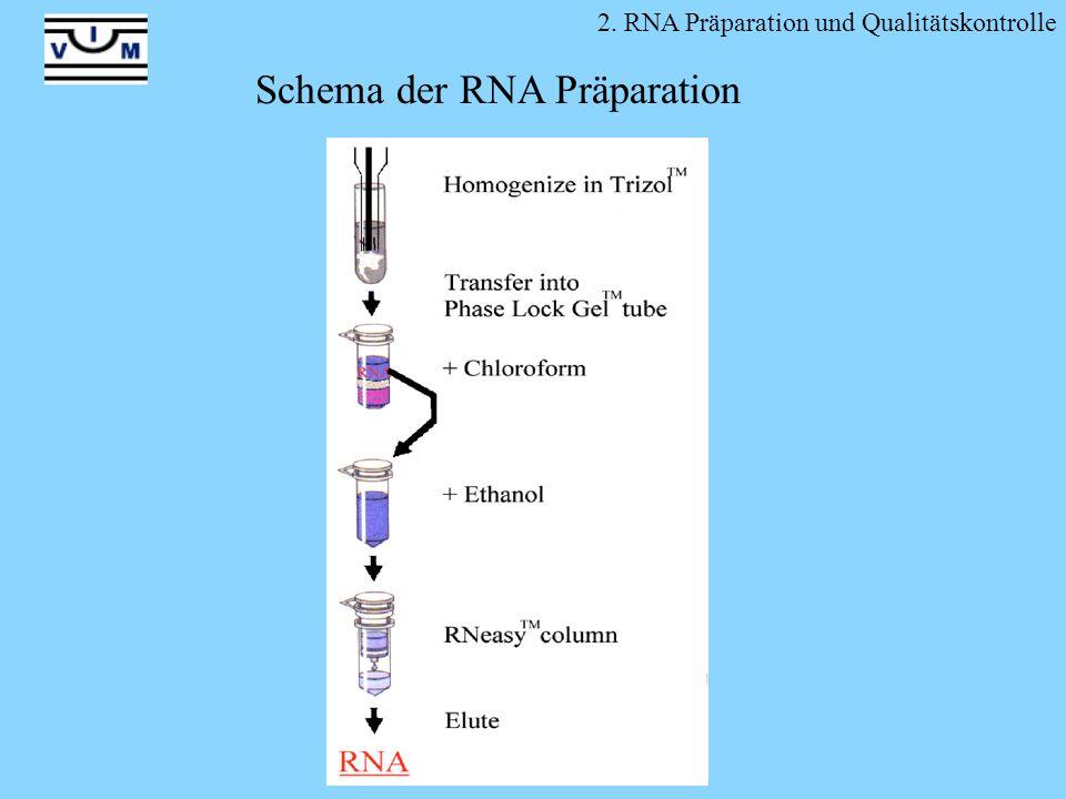 2. RNA Präparation und Qualitätskontrolle Schema der RNA Präparation