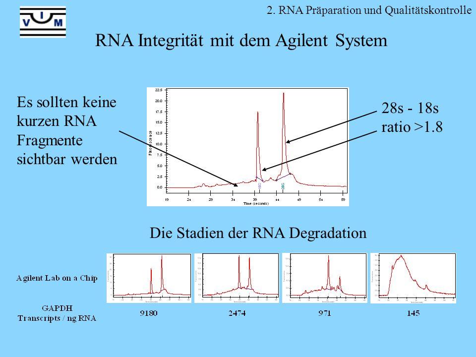 Die Stadien der RNA Degradation RNA Integrität mit dem Agilent System 28s - 18s ratio >1.8 2. RNA Präparation und Qualitätskontrolle Es sollten keine