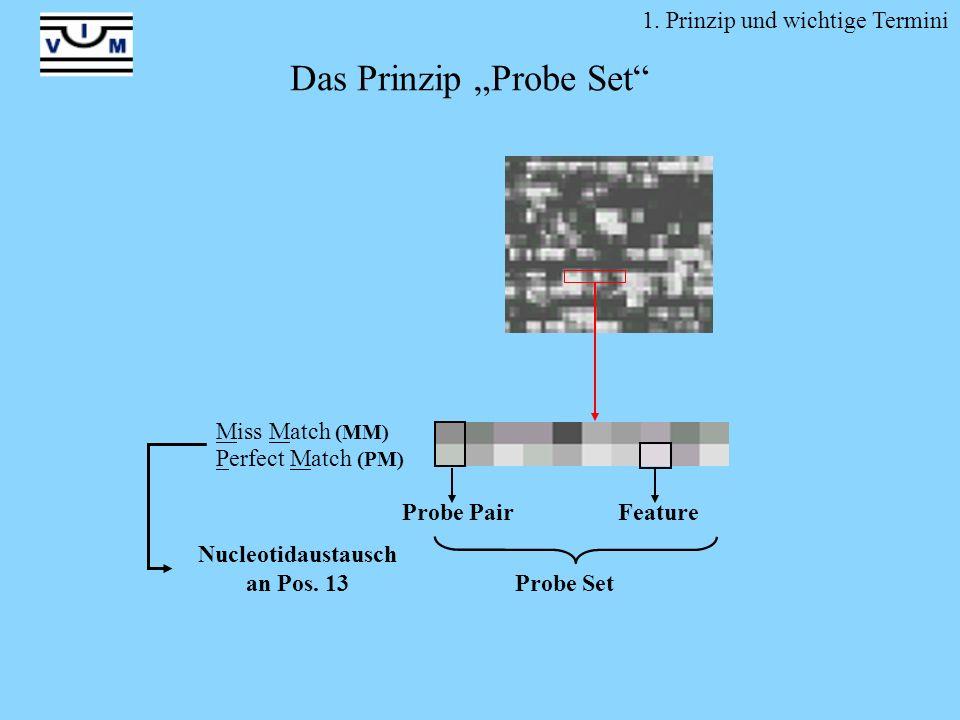1. Prinzip und wichtige Termini Probe Set Probe PairFeature Miss Match (MM) Perfect Match (PM) Nucleotidaustausch an Pos. 13 Das Prinzip Probe Set