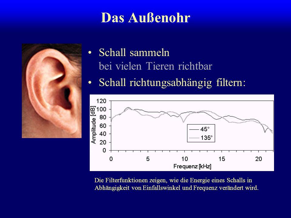 Das Außenohr Schall sammeln bei vielen Tieren richtbar Schall richtungsabhängig filtern: Die Filterfunktionen zeigen, wie die Energie eines Schalls in Abhängigkeit von Einfallswinkel und Frequenz verändert wird.
