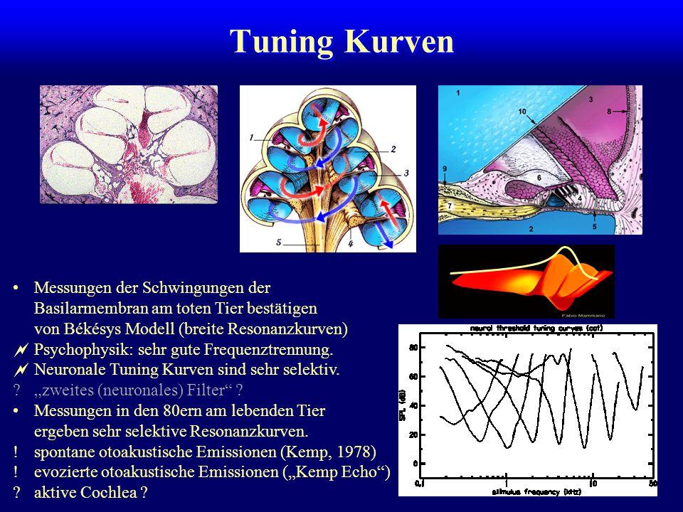 Innere und äußere Haarzellen Innere Haarzellen: eine Reihe, 3000 Stück multipel efferent innerviert (20-fach) Äußere Haarzellen: 3-5 Reihen, v-förmig überwiegend afferent innerviert