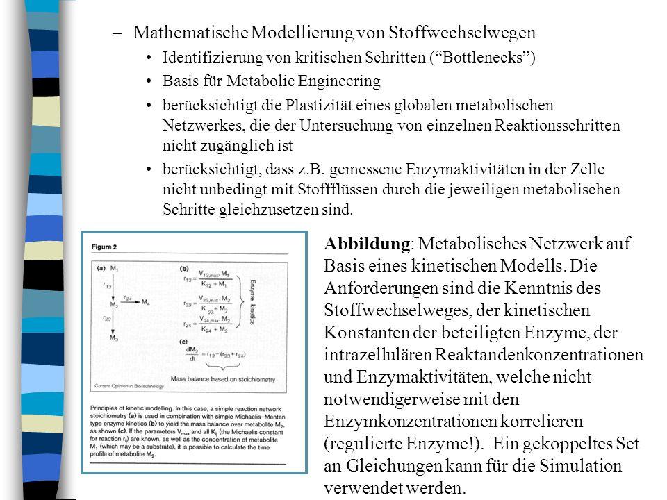 –Mathematische Modellierung von Stoffwechselwegen Identifizierung von kritischen Schritten (Bottlenecks) Basis für Metabolic Engineering berücksichtig
