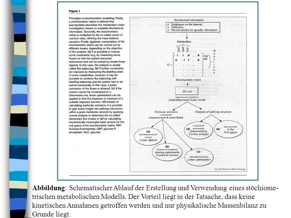 Abbildung: Schematischer Ablauf der Erstellung und Verwendung eines stöchiome- trischen metabolischen Modells. Der Vorteil liegt in der Tatsache, dass
