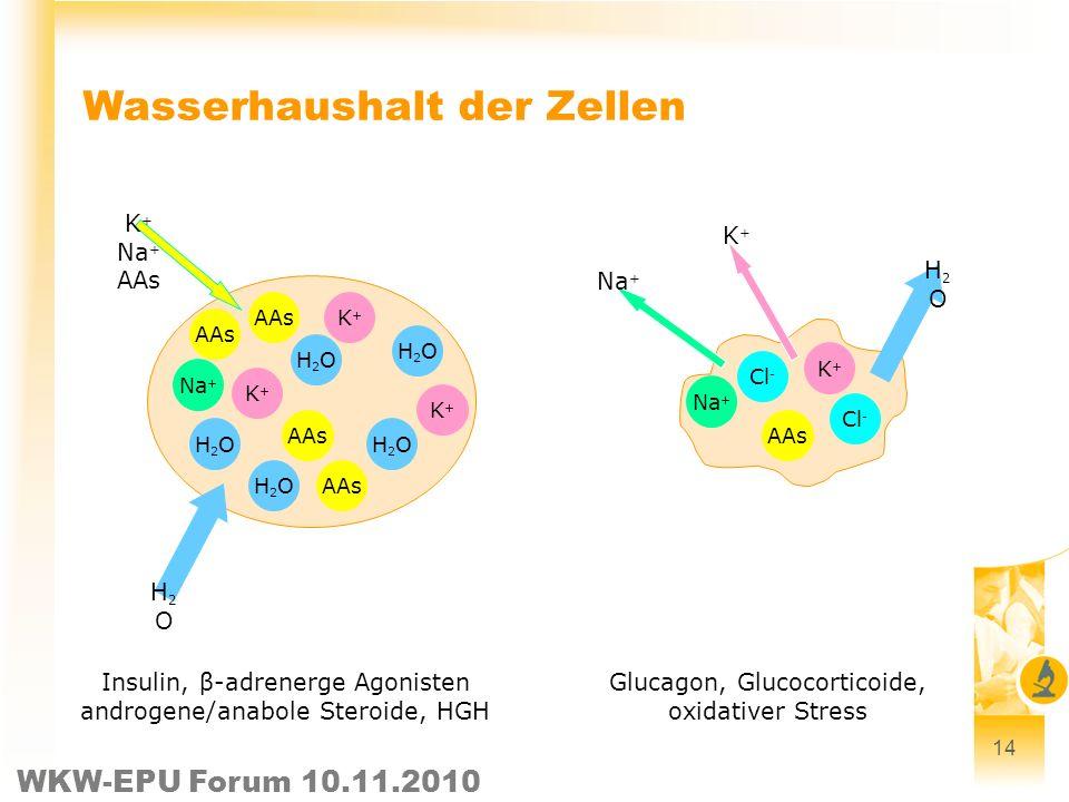 WKW-EPU Forum 10.11.2010 14 Wasserhaushalt der Zellen Insulin, β-adrenerge Agonisten androgene/anabole Steroide, HGH Glucagon, Glucocorticoide, oxidat