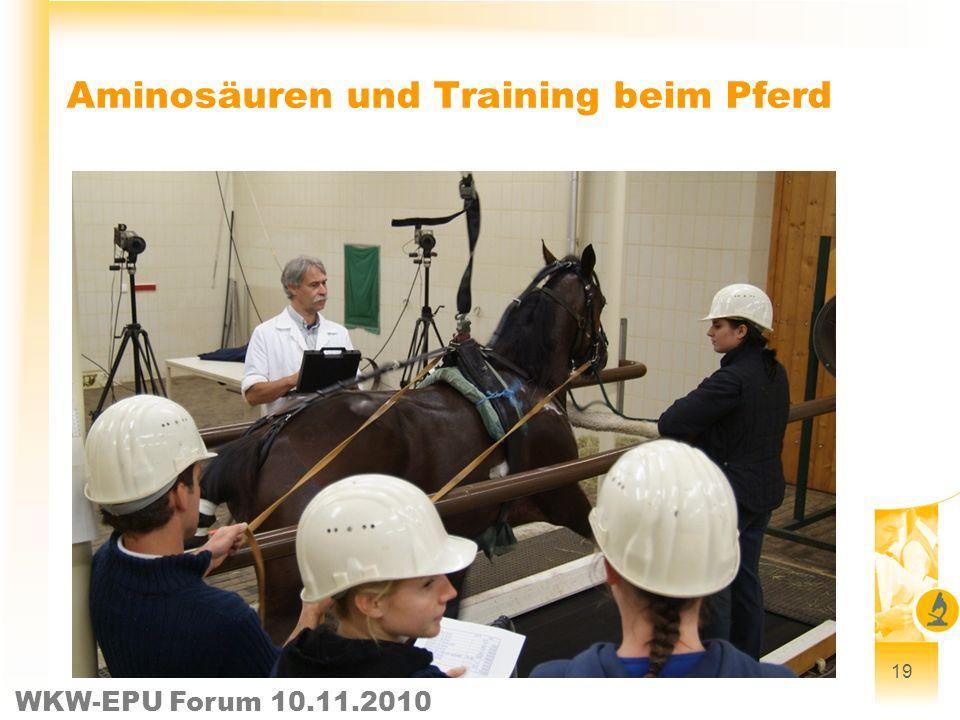 WKW-EPU Forum 10.11.2010 19 Aminosäuren und Training beim Pferd