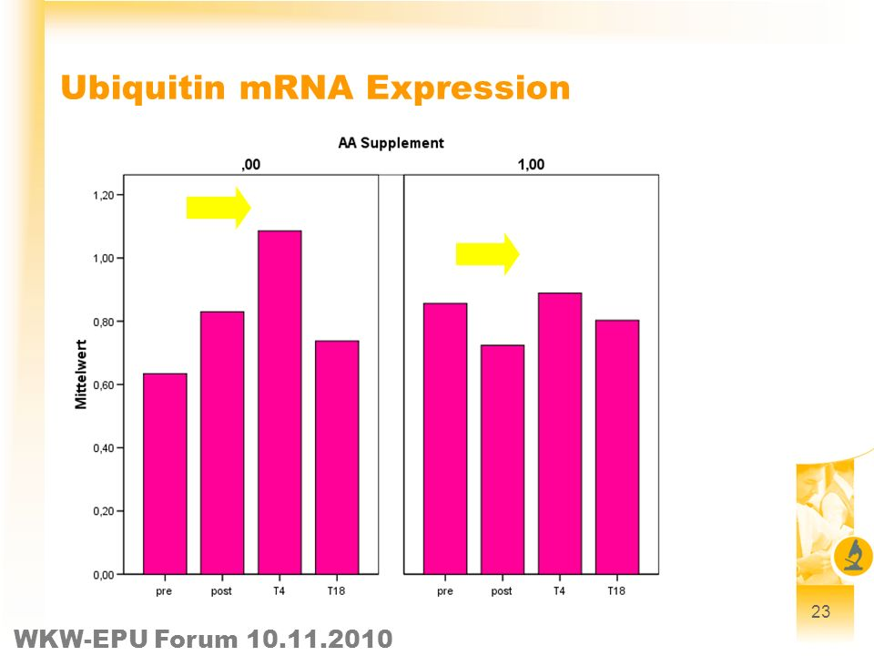 WKW-EPU Forum 10.11.2010 23 Ubiquitin mRNA Expression