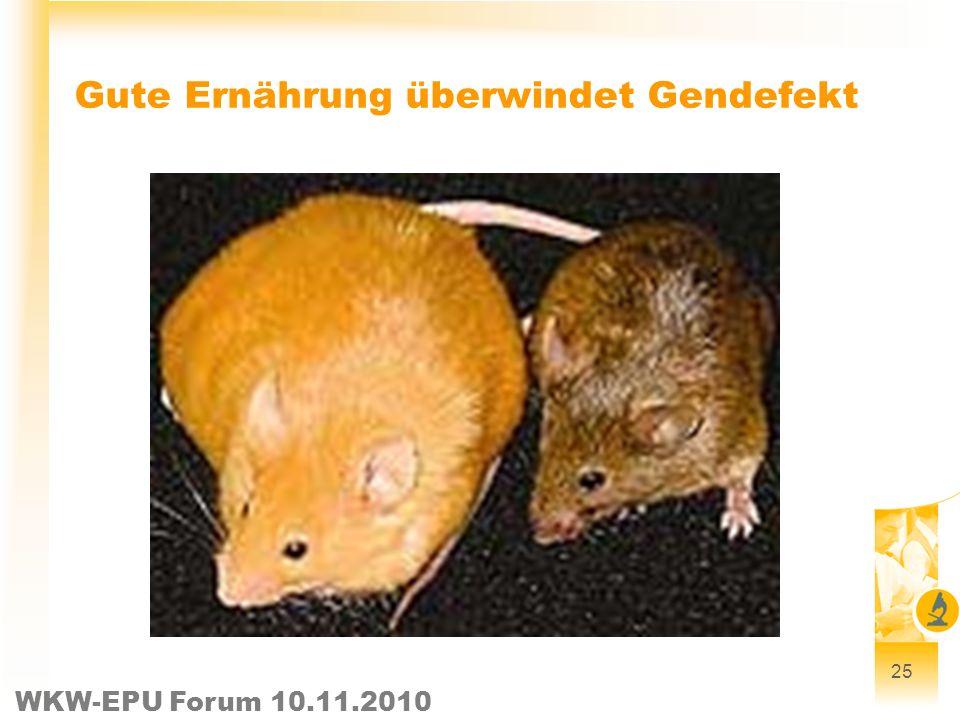 WKW-EPU Forum 10.11.2010 Gute Ernährung überwindet Gendefekt 25