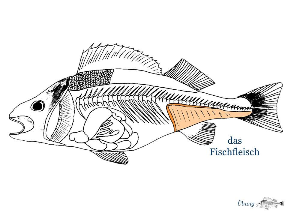 das Fischfleisch Übung m