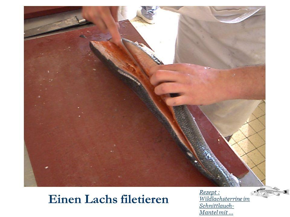 Einen Lachs filetieren Rezept : Wildlachsterrine im Schnittlauch- Mantel mit …