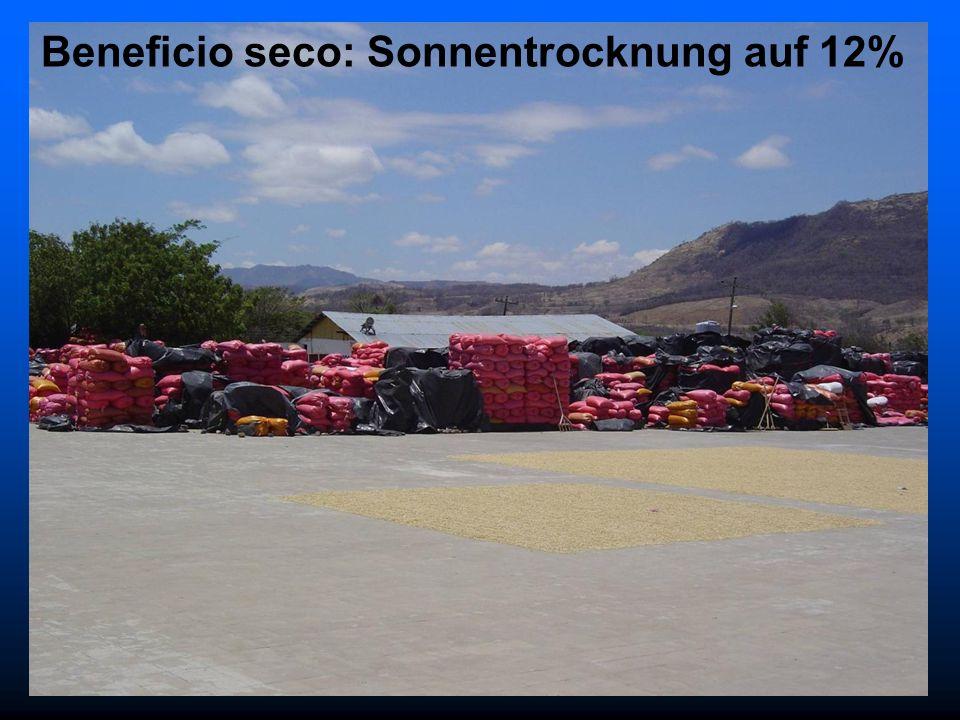 Beneficio seco: Sonnentrocknung auf 12%