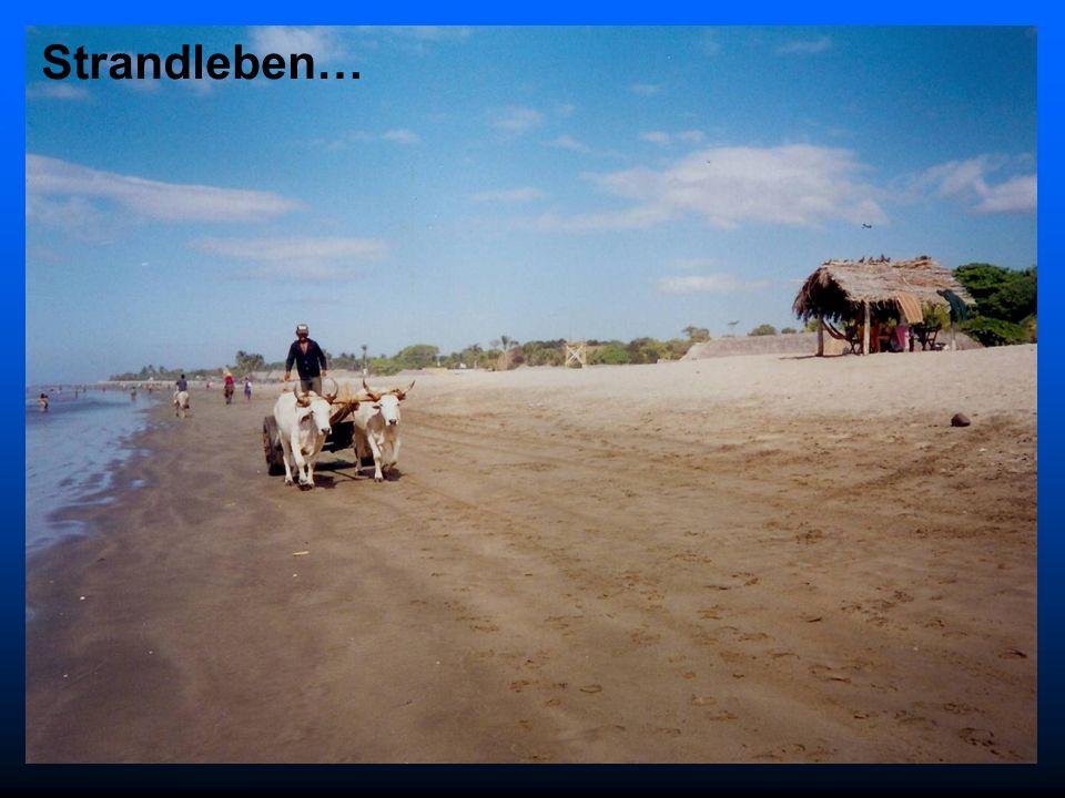 Strandleben…