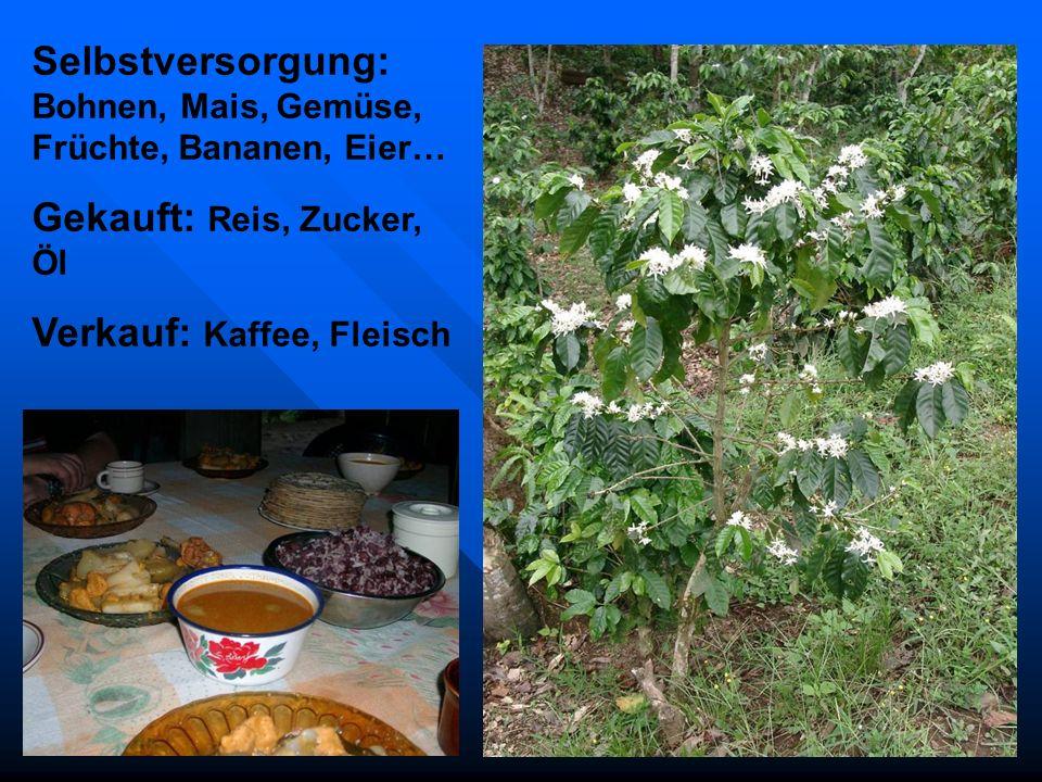 Selbstversorgung: Bohnen, Mais, Gemüse, Früchte, Bananen, Eier… Gekauft: Reis, Zucker, Öl Verkauf: Kaffee, Fleisch