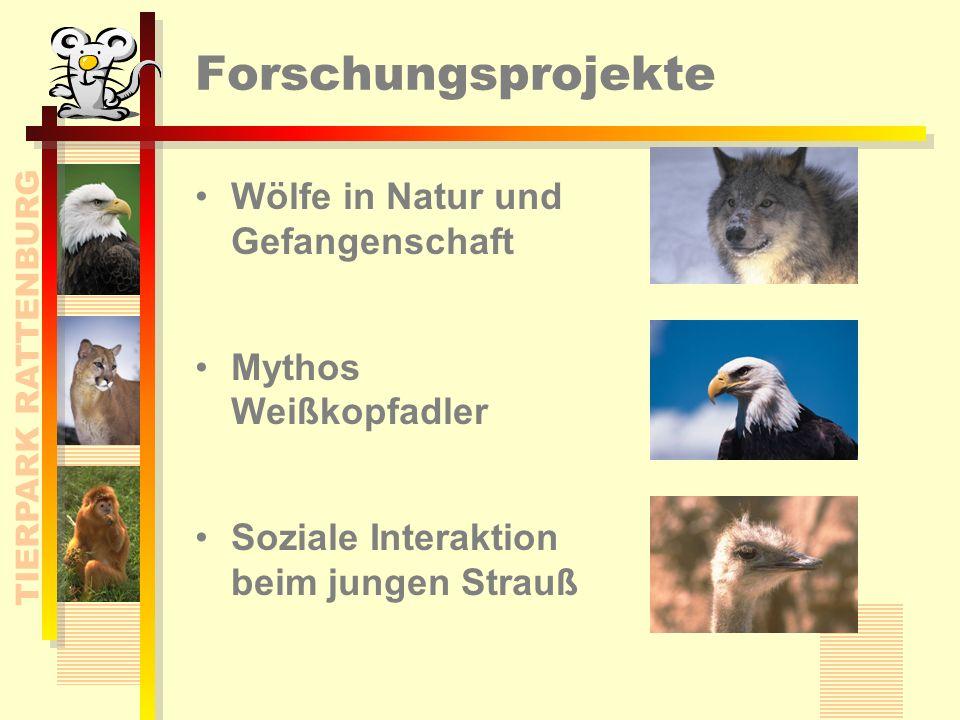 Wissenschaft & Forschung Schwerpunkt: Wölfe in Natur und Gehege