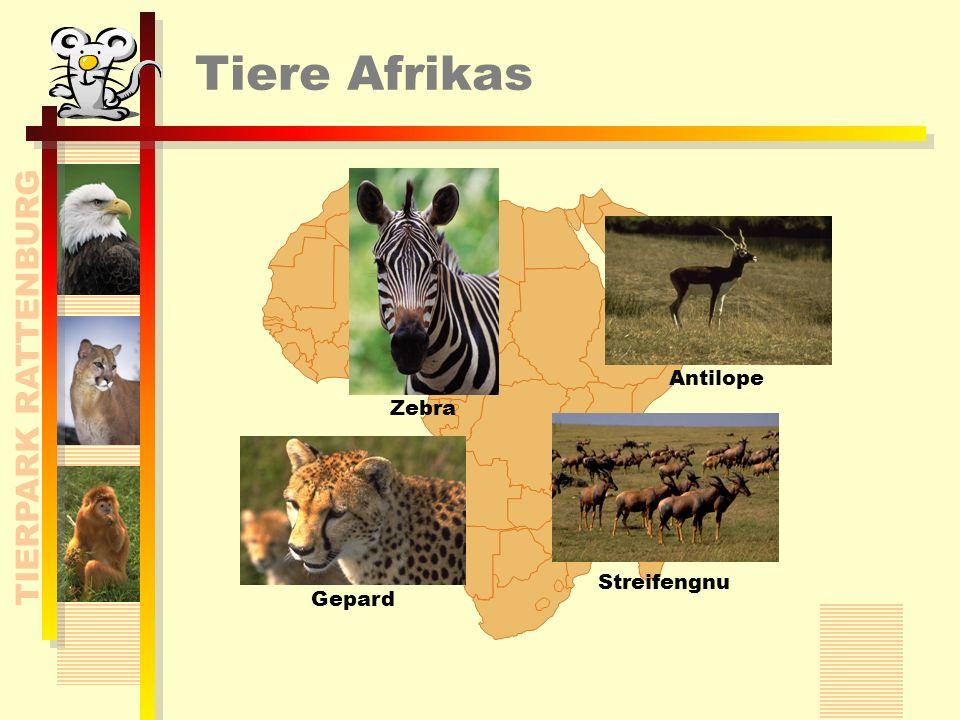 TIERPARK RATTENBURG Tiere Afrikas Antilope Zebra Gepard Streifengnu