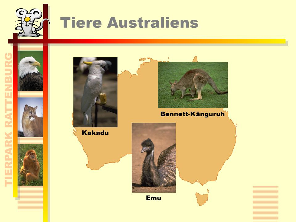 TIERPARK RATTENBURG Tiere Australiens KakaduEmu Bennett-Känguruh