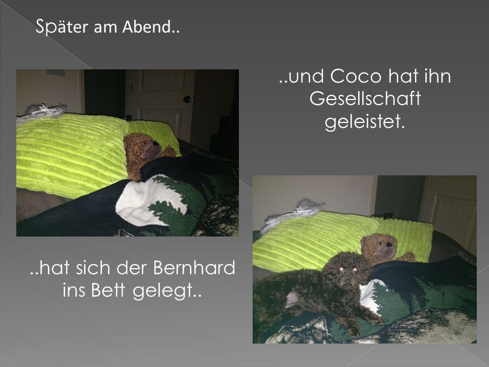Sp ӓter am Abend....hat sich der Bernhard ins Bett gelegt....und Coco hat ihn Gesellschaft geleistet.