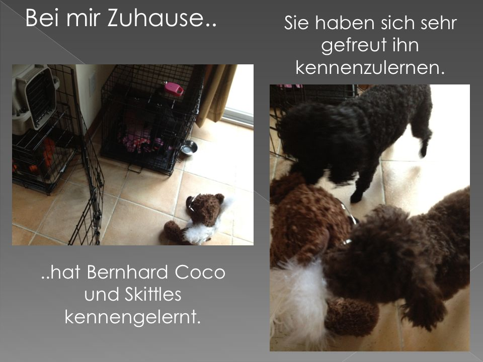 Bei mir Zuhause....hat Bernhard Coco und Skittles kennengelernt.