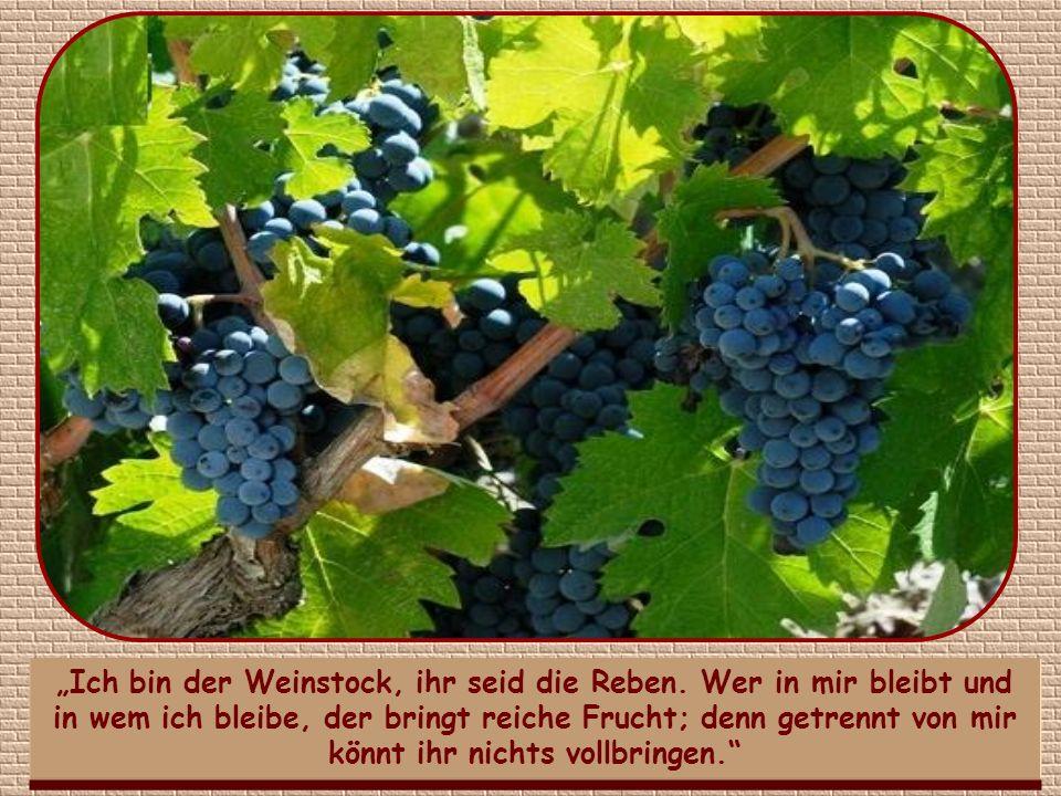 Aber reiche Frucht bedeutet nicht nur geistige und materielle Güter für andere, sondern auch für uns selbst.