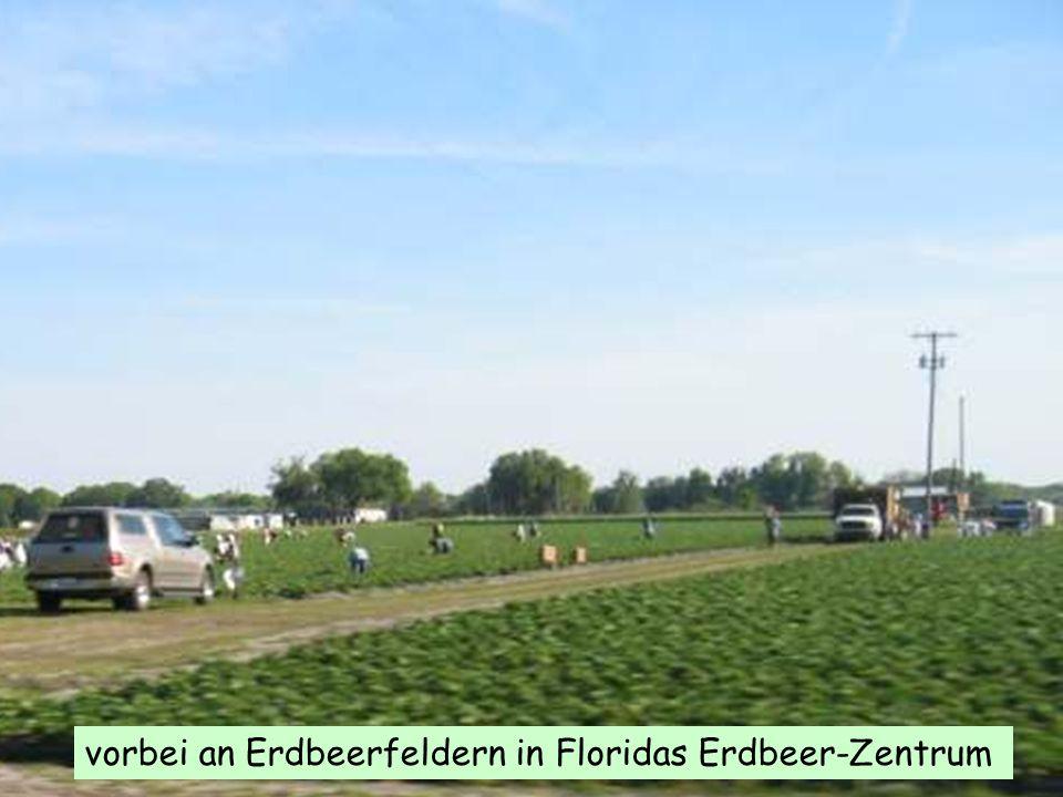 vorbei an Erdbeerfeldern in Floridas Erdbeer-Zentrum