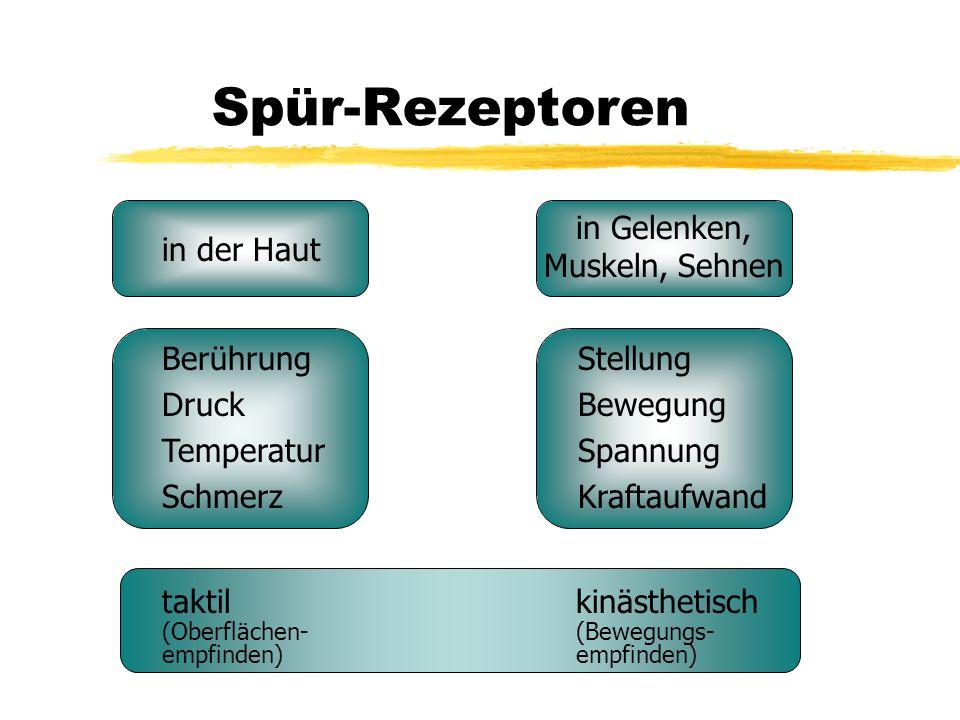Spür-Rezeptoren in der Haut in Gelenken, Muskeln, Sehnen Berührung Druck Temperatur Schmerz Stellung Bewegung Spannung Kraftaufwand taktil kinästhetis