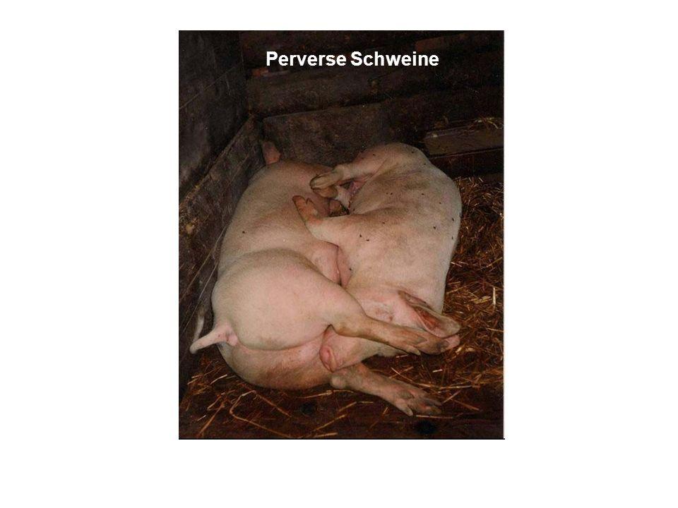 Perverse Schweine