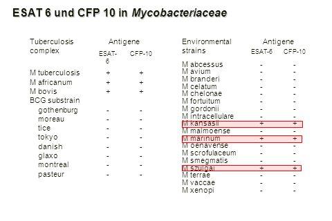 ESAT 6 und CFP 10 in Mycobacteriaceae Environmental strains Antigene ESAT-6CFP-10 M abcessus-- M avium-- M branderi-- M celatum-- M chelonae-- M fortu