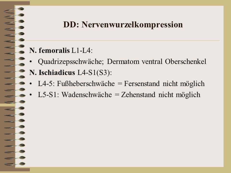 DD: Nervenwurzelkompression N. femoralis L1-L4: Quadrizepsschwäche; Dermatom ventral Oberschenkel N. Ischiadicus L4-S1(S3): L4-5: Fußheberschwäche = F