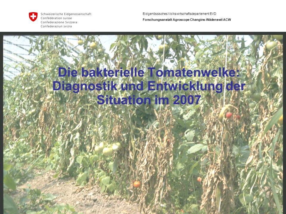 Eidgenössisches Volkswirtschaftsdepartement EVD Forschungsanstalt Agroscope Changins-Wädenswil ACW Die bakterielle Tomatenwelke: Diagnostik und Entwic